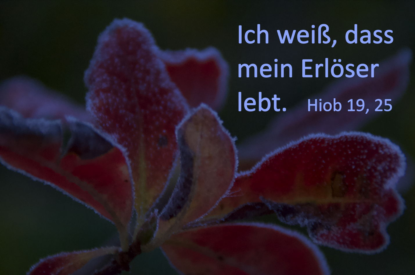 Erster Frost am 31.10.2019 morgens ...