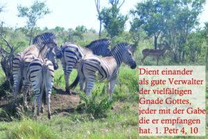 Kruger-Park, Suedafrika, als Kulisse fuer den Monatsspruch
